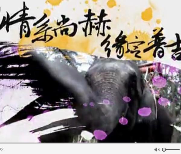 随尚赫游世界普吉岛站 第一梯次精华版